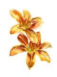 Картина акварели 2 красных лилий Стоковые Изображения