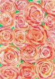 Картина акварели оранжевой предпосылки роз Стоковая Фотография