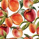 Картина акварели с персиками Бесплатная Иллюстрация