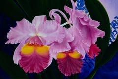 Картина акварели флористическая безшовная с цветками орхидеи Стоковое Изображение RF
