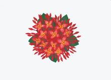 Картина акварели цветка Ixora Стоковые Фото