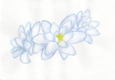 Картина акварели цветка Tuberosa Стоковое фото RF