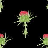 Картина акварели чертополоха безшовная Стоковые Фотографии RF
