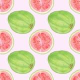 Картина акварели Guava или guayaba безшовная Стоковые Изображения