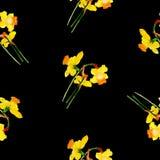 Картина акварели narcissus весны безшовная Стоковые Изображения RF