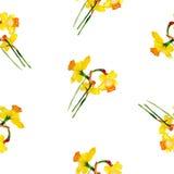 Картина акварели narcissus весны безшовная Стоковые Фотографии RF