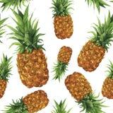 Картина ананаса акварели безшовная Рука покрасила тропический плодоовощ при листья изолированные на белой предпосылке Питание Стоковые Фото