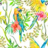 Картина ары безшовная Злободневные цветок и листья, гибискус попыгай тропический экзотическо Вектор для вашего дизайна Стоковая Фотография RF