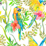 Картина ары безшовная Злободневные цветок и листья, гибискус попыгай тропический экзотическо конструируйте ваше Стоковые Изображения