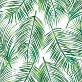 картина ладони листьев безшовная Стоковые Фотографии RF