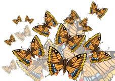 Картина бабочек Стоковые Изображения RF