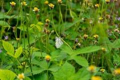 Картина бабочки, белое красочное во времени лететь, и остров цветков Стоковые Фото