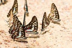 Картина бабочки близкая поднимающая вверх Стоковая Фотография RF