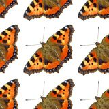 Картина бабочки стоковое изображение rf