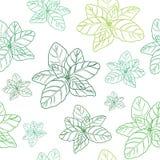 Картина базилика зеленая безшовная Стоковые Фото