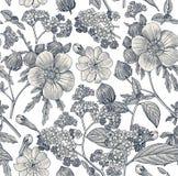 картина безшовная Реалистические изолированные цветки Винтажный вектор гравировки чертежа hibisc primavera гибискуса heliotrope п Стоковое фото RF