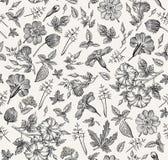 картина безшовная Реалистические изолированные цветки Винтажный вектор гравировки чертежа hibisc primavera петуньи предпосылки иллюстрация вектора