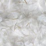Картина белых пер Стоковая Фотография RF