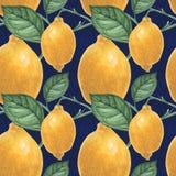Картина ботанического лимона лимона синяя безшовная иллюстрация вектора