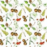 Картина ботанической акварели безшовная Стоковое фото RF