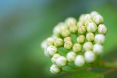 Картина букета белых цветков Стоковые Фото