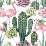 Картина вектора акварели безшовная розового фламинго, кактусов и суккулентных заводов изолированных на белой предпосылке иллюстрация вектора