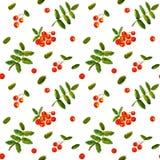 Картина вектора акварели ягоды рябины винтажной нарисованная рукой безшовная Стоковые Изображения RF