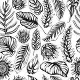 Картина вектора безшовная листьев и calathea ладони Нарисованная рукой иллюстрация вектора иллюстрация вектора