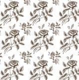 Картина вектора безшовная с розами Стоковая Фотография