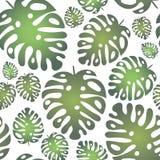 Картина вектора безшовная с тропическими листьями на белой предпосылке иллюстрация штока