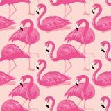 Картина вектора безшовная с фламинго Стоковая Фотография RF