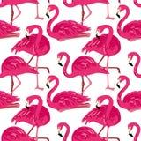 Картина вектора безшовная с фламинго Стоковые Фотографии RF