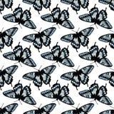 Картина вектора безшовная с яркими бабочками Нарисованный рукой дизайн текстуры Стоковые Фото