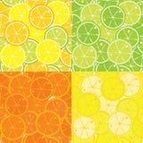 Картина вектора безшовная цитрусовых фруктов Стоковые Фотографии RF