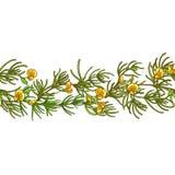 Картина вектора ветви Rooibos иллюстрация вектора