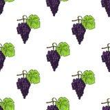 Картина вектора виноградины безшовной покрашенная каллиграфией стоковые изображения rf
