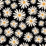 Картина вектора винтажных цветков маргаритки безшовная Огорченные белые цветки стоцвета на черной предпосылке современно бесплатная иллюстрация