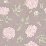 Картина вектора пастельная безшовная цветков Зацветая пион с открытым и закрытым бутоном, листьями и хворостинами график Стоковое Фото