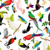 Картина вектора попугаев Стоковые Изображения RF