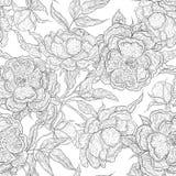 Картина вектора черно-белая безшовная цветков paeony Зацветая пион с открытым и закрытым бутоном, листьями и Стоковое Изображение