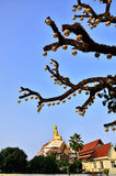 Картина ветви Стоковое Изображение RF