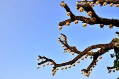 Картина ветви Стоковое фото RF