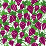 картина виноградины безшовная Стоковые Изображения RF