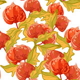 Картина винтажных обоев безшовная с цветком крыжовника накидки Стоковая Фотография RF