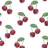 Картина вишни акварели Стоковое Изображение RF