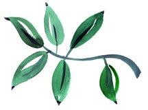 Картина впечатления лист акварели Стоковое Изображение RF