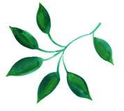 Картина впечатления лист акварели бесплатная иллюстрация