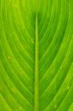 Картина выровнянная природой Стоковое фото RF