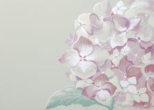 Картина гортензии Стоковые Изображения