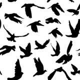 Картина голубей и голубей безшовная для концепции и свадьбы мира конструирует Стоковое Изображение RF